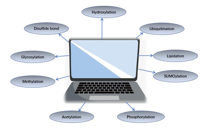 Computational modeling of post-translational modifications.