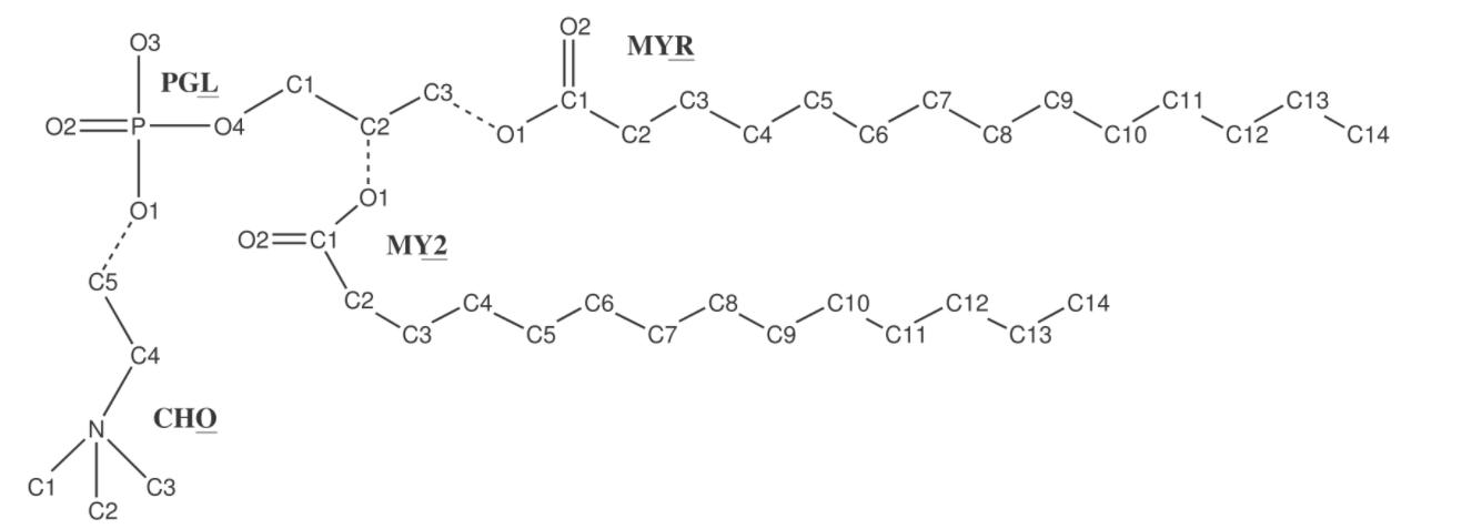 Structure of DMPC