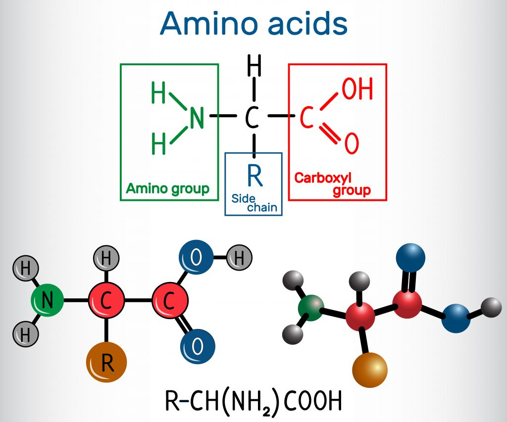 Amino Acid Composition Analysis Service 2