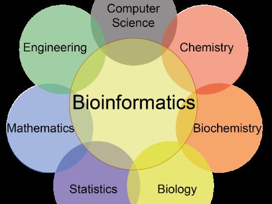 Bioinformatics Analysis of Metabolomics