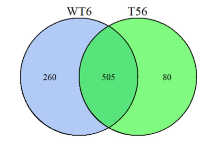 Bioinformatics Analysis of Proteomics