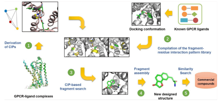 Flow chart of fragment-based GPCR ligand design.