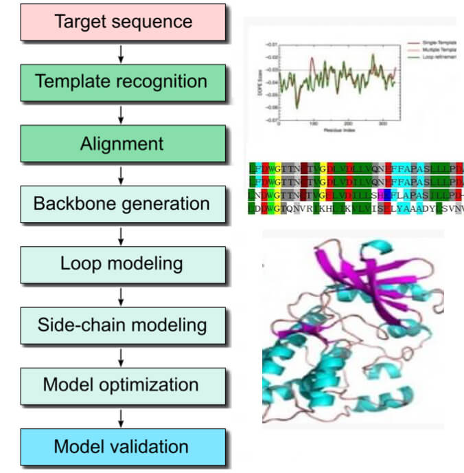 Process of homology modeling service.