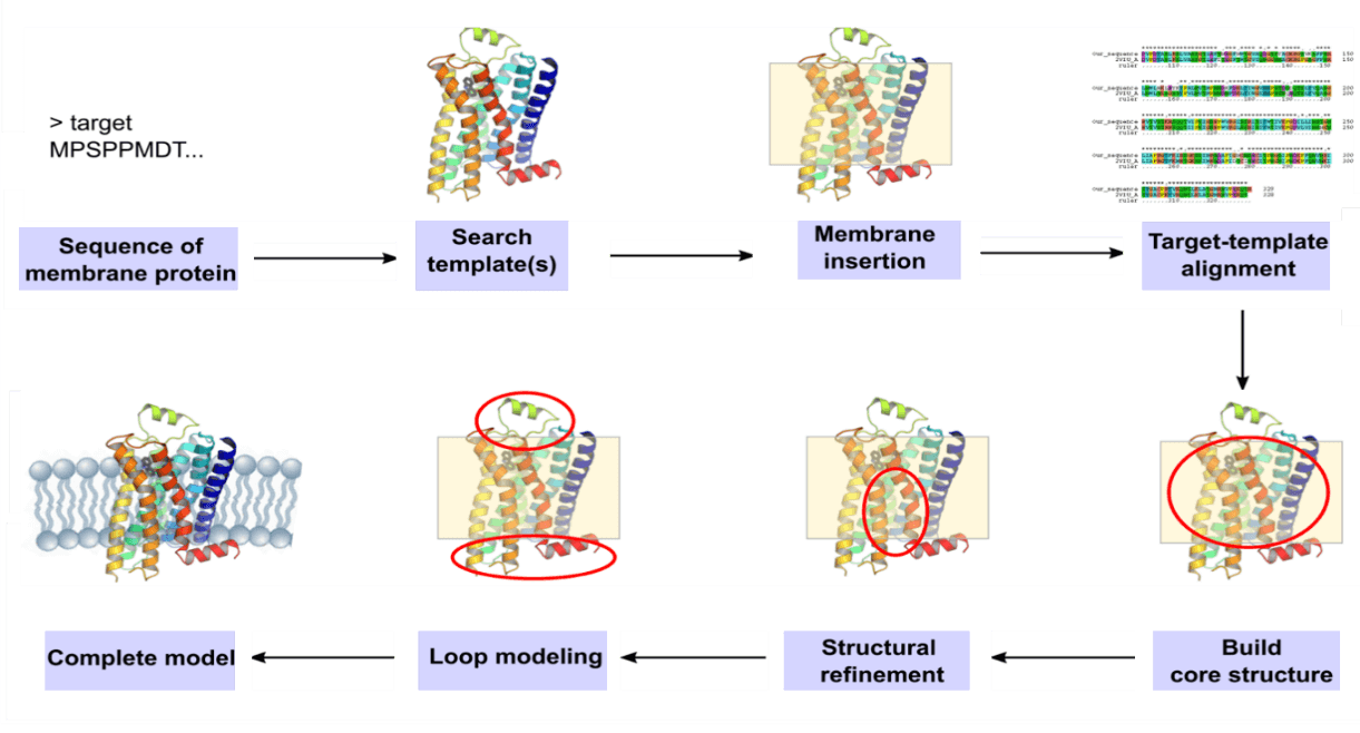 Membrane-Protein-Modeling-Service 2