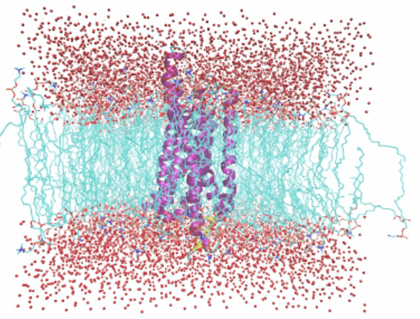 Membrane-Protein-Modeling-Service 4