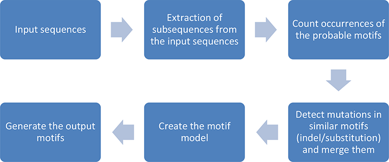 General motif discovery process.