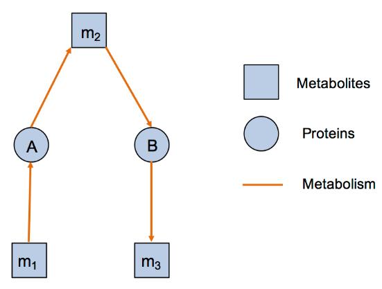 Network Analysis Service in Biology 4