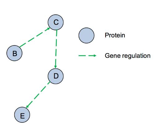 Network Analysis Service in Biology 5