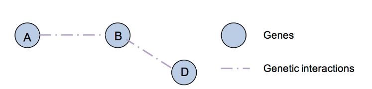 Network Analysis Service in Biology 6