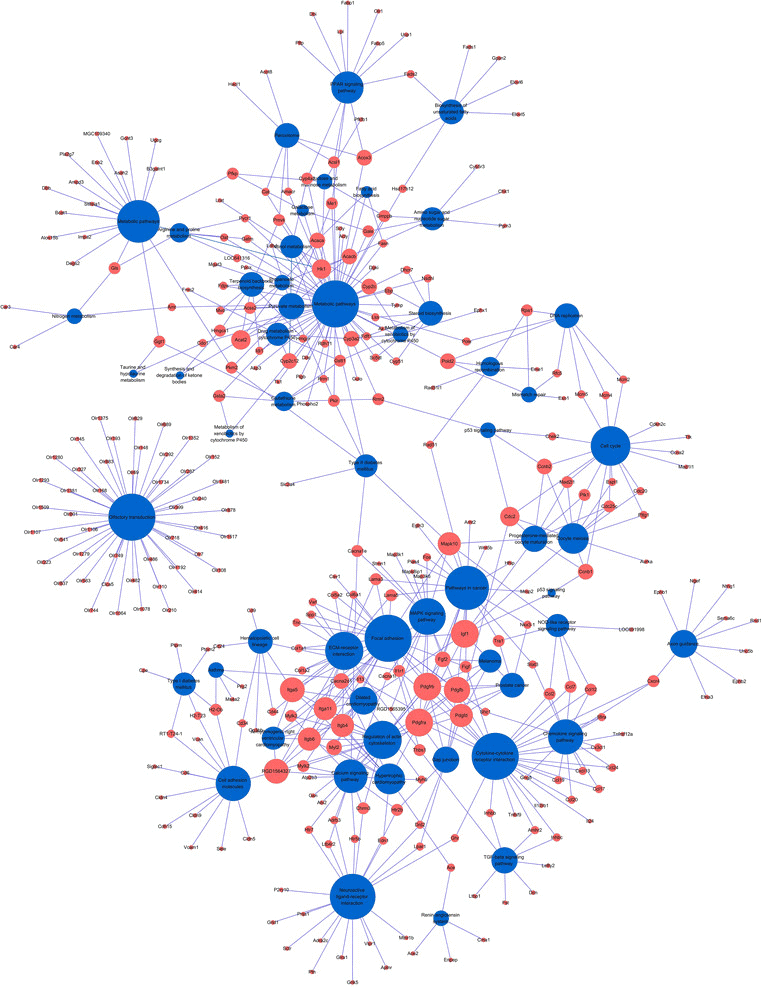 Demo result of pathway and network analysis.
