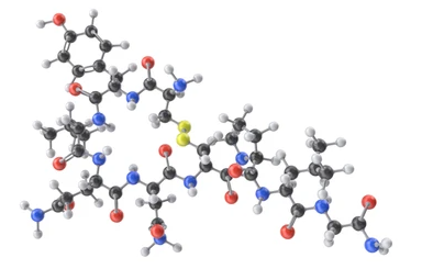 Overall solutions of Peptide Drug Energy Calculation Service