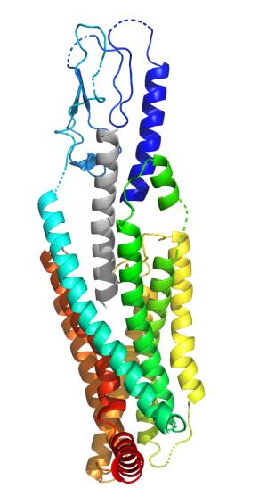 Peptide Molecular Dynamics Simulation