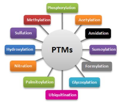 Computational modeling of post-translational modifications