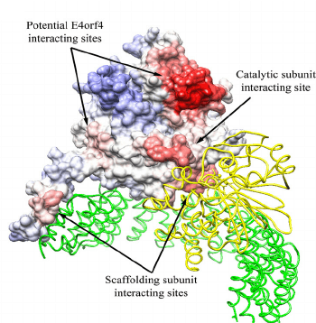 Protein-Protein Interactions sites.