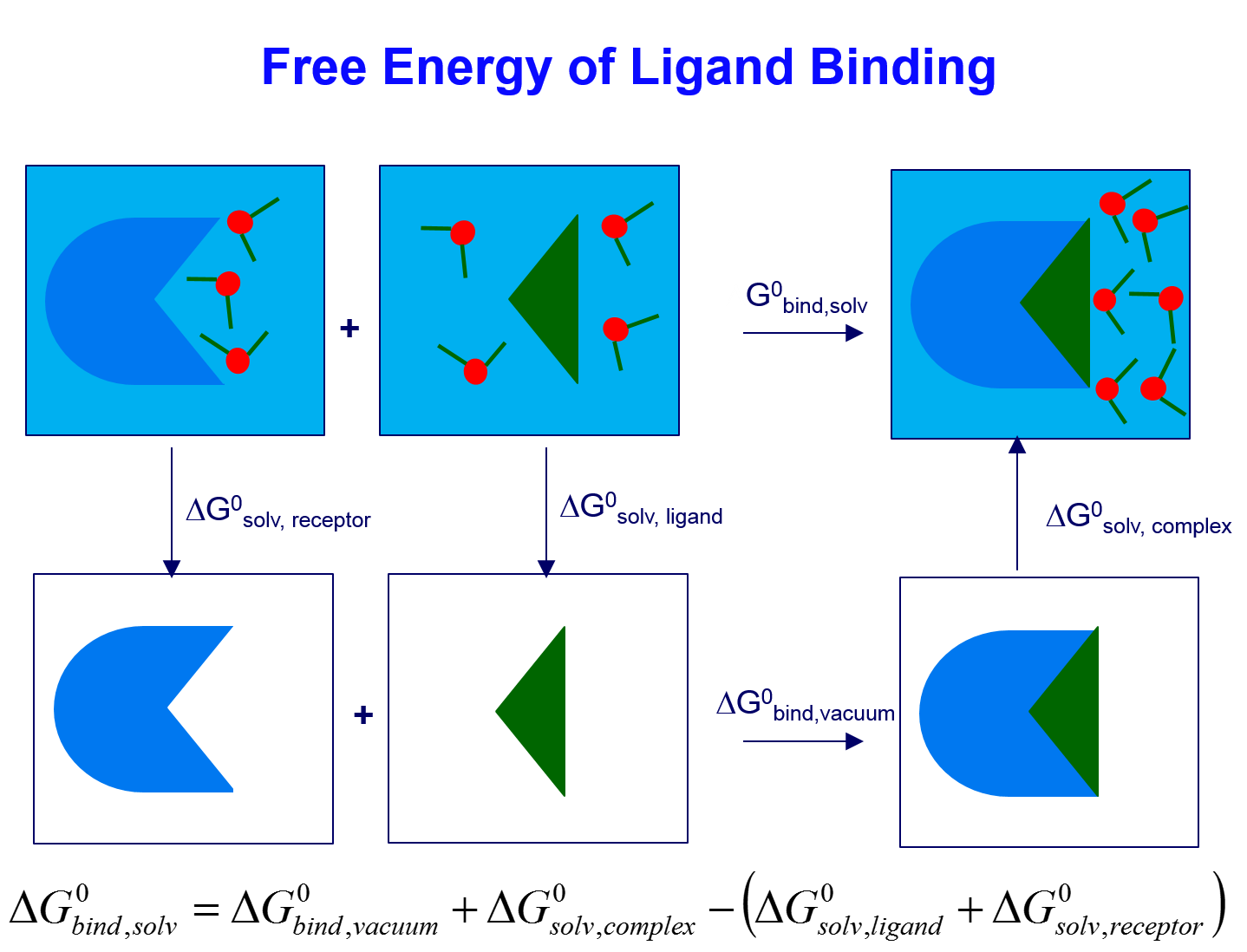 Binding free energy calculation.