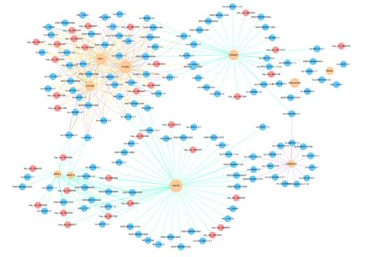 Demo result of ceRNA regulatory network construction service.
