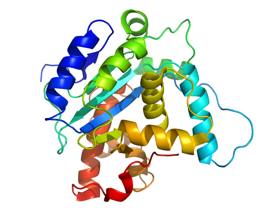 Protein secondary structure.