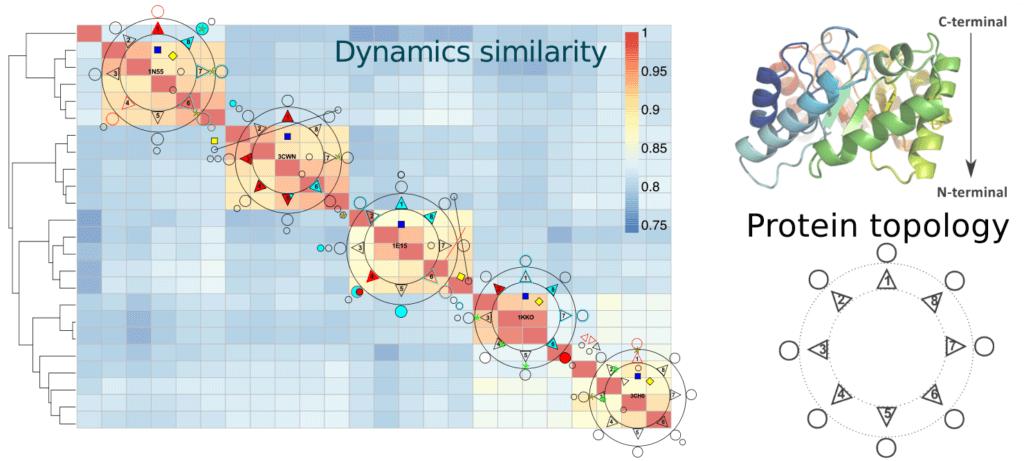 Dynamics similarity.