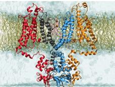 DNA molecular dynamics simulation service 2