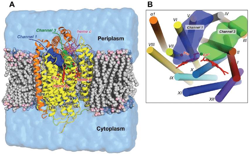 Enzyme molecular dynamics simulation service 1