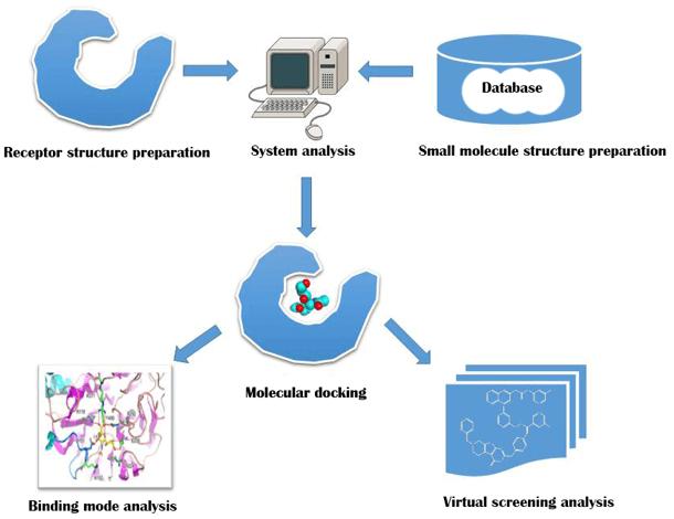 Workflow of molecular docking.