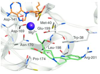 Protein-Protein Docking Service