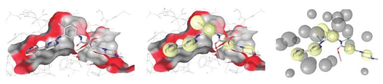 Pharmacophore model.